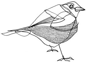 300x215 The Best Bird Line Drawing Ideas On Mixed Media