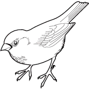 300x300 The Sparrow (@moveincircles) Twitter