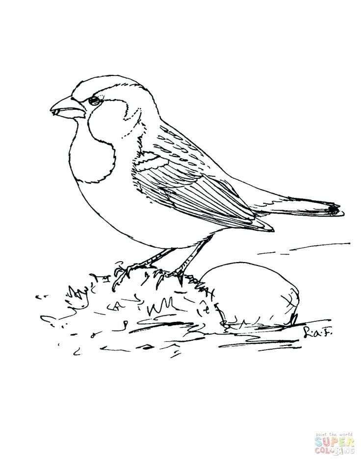 736x937 Sparrow Coloring Pages Holidayvillas.co