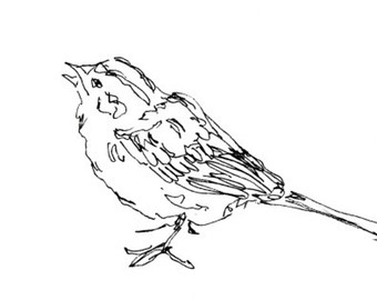 340x270 Bird Art Print Wren Songbird Line Drawing Pen Ink Giclee