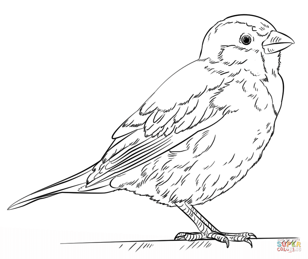 981x824 Chipping Sparrow Coloring Page For Outline