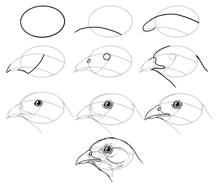 700x610 How To Draw Birds Step By Step Instructions