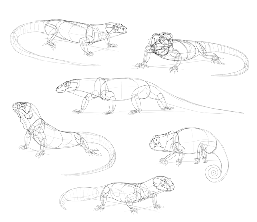 900x775 How To Draw Lizards (Aka Real Life Dragons)