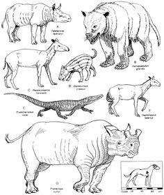 236x280 Prehistoric Mammals Illustration 1000 Drawings Project Research