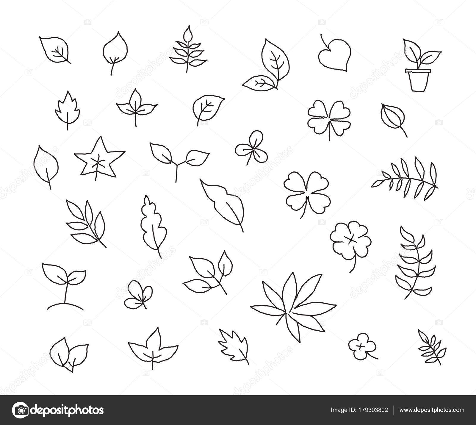 1600x1428 Different Types Of Leaves Set Of Various Species Of Trees