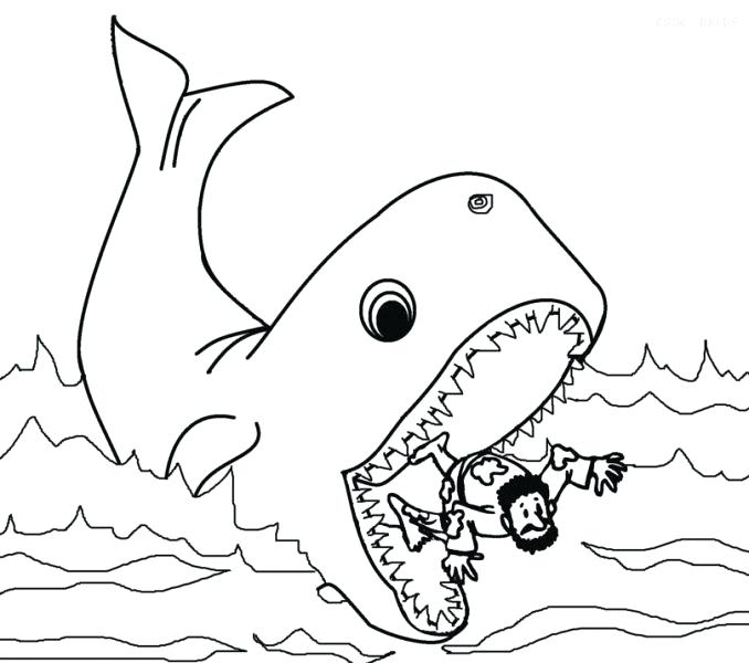 Sperm Whale Drawing at GetDrawings.com | Free for personal use Sperm ...