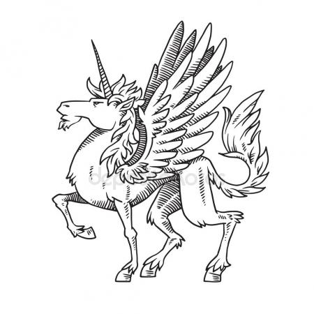 450x450 Pegasus Supernatural Beast. Sketch Isolated On White Background