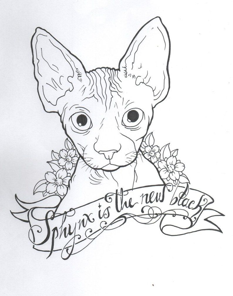 Sphynx Cat Drawing