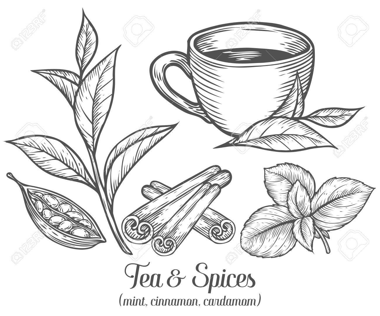 1300x1083 Green Black Herbal Tea Plant, Leaf With Spices Cardamom, Cinnamon