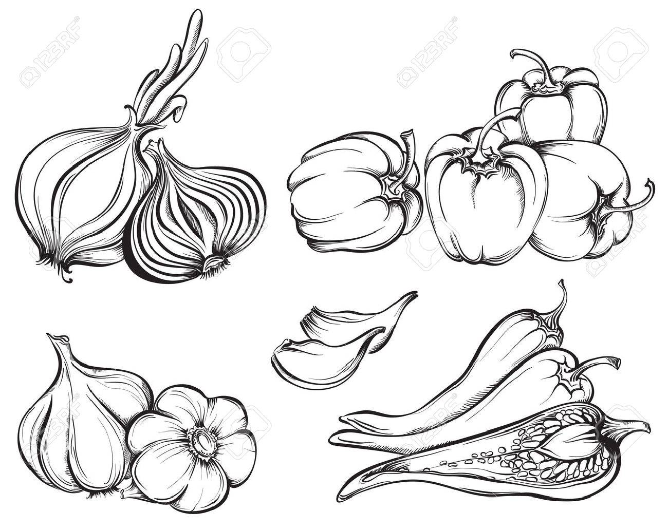 1300x1032 Hand Drawn Vegetables Set. Collection Of Spices Paprika, Chili