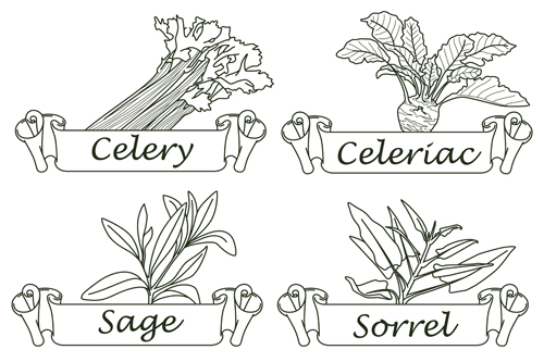 500x333 Hand Drawn Herbs And Spices Labels Vector 05