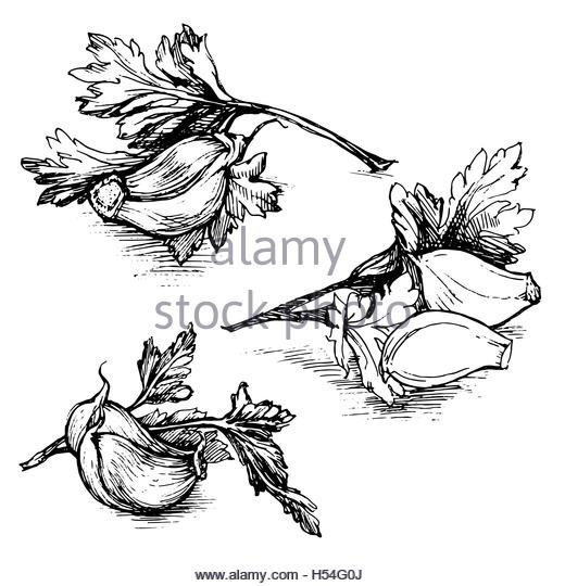 520x540 Herbs Spices Sketch Stock Photos Amp Herbs Spices Sketch Stock