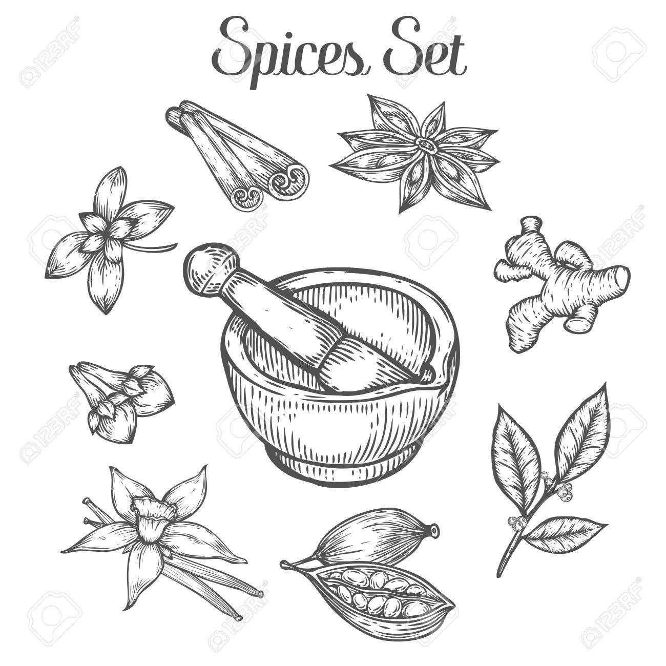 1300x1300 Mortar And Pestle With Spices. Hand Drawn Sketch Vector Retro