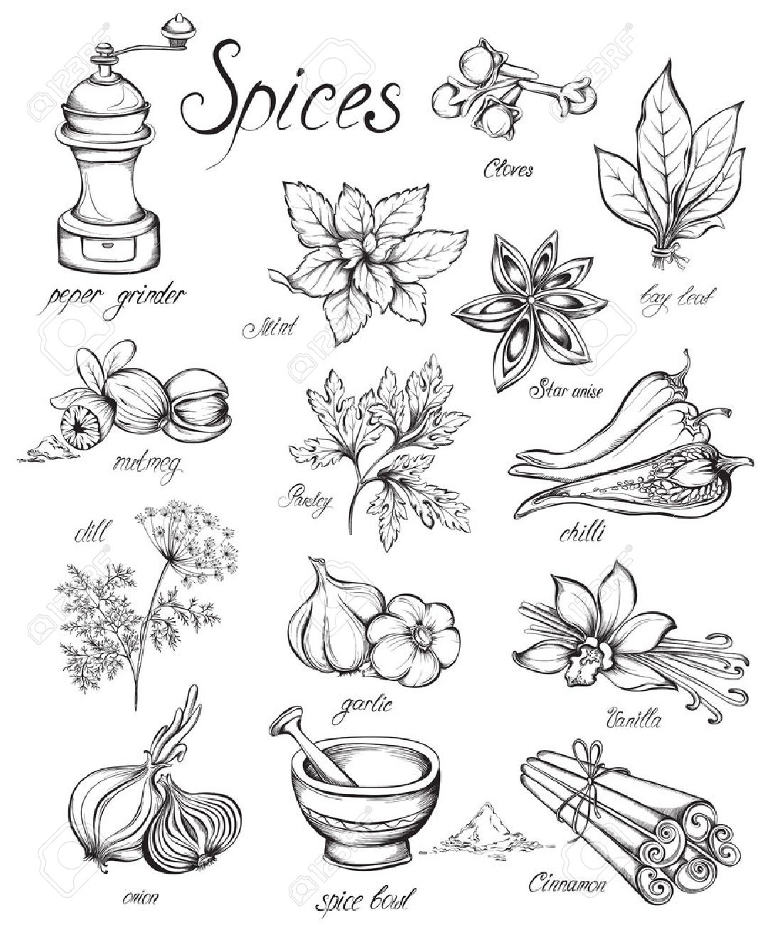 1090x1300 Set Kitchen Herbs And Spices. Hand Drawn Vector Illustration
