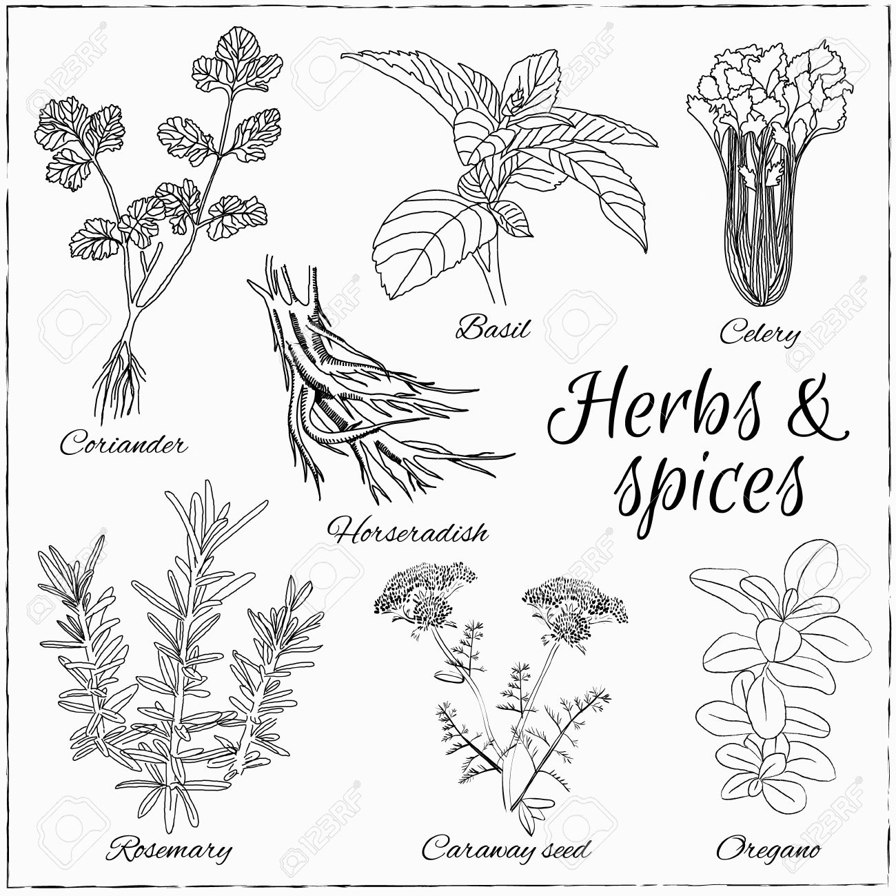 1300x1300 Vector Hand Drawn Set With Herbs And Spices. Vintage Illustration