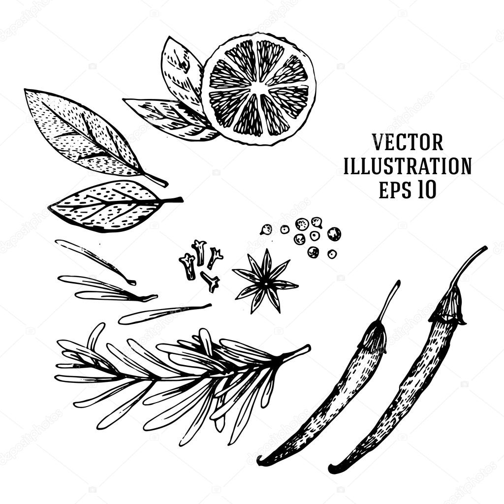 1024x1024 Vector Hand Drawn Lime Spices Set. Half Lime, Leaf, Spices