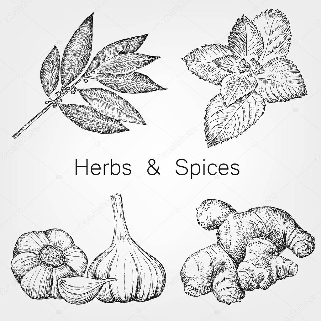 1024x1024 Herbs And Spices Stock Vector Lenaalyonushka