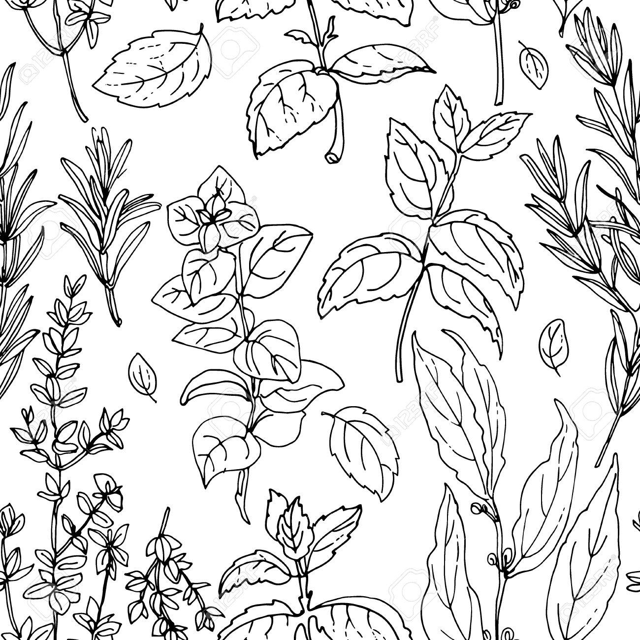 1300x1300 Drawn Herbs