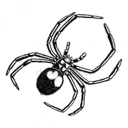 450x450 Drawing Art Of Spider Stock Vector Baavli