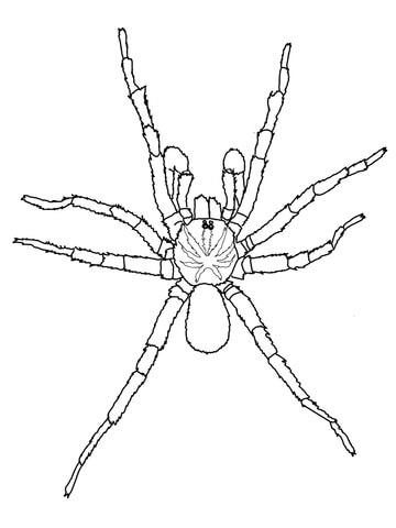 360x480 Sydney Brown Trapdoor Spider Coloring Page Free Printable