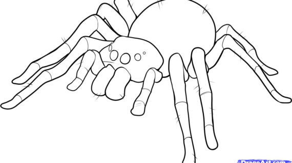 570x320 Spider Drawing For Kids 11. How To Draw An Easy Spider