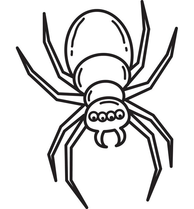 650x700 Spider Shape Template