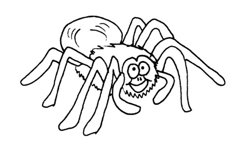 800x500 Spider Coloring Pages Coloring Pages Wallpaper