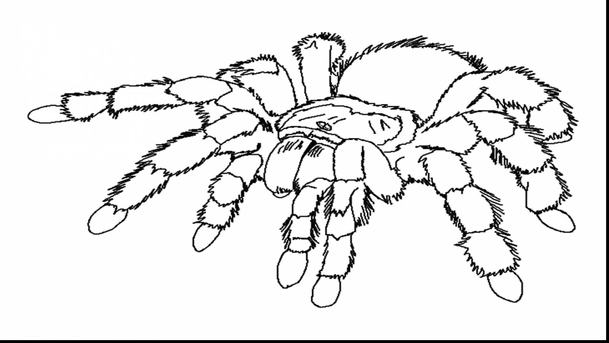 2112x1188 The Brilliant As Well Gorgeous Spider Web Coloring Page Pages
