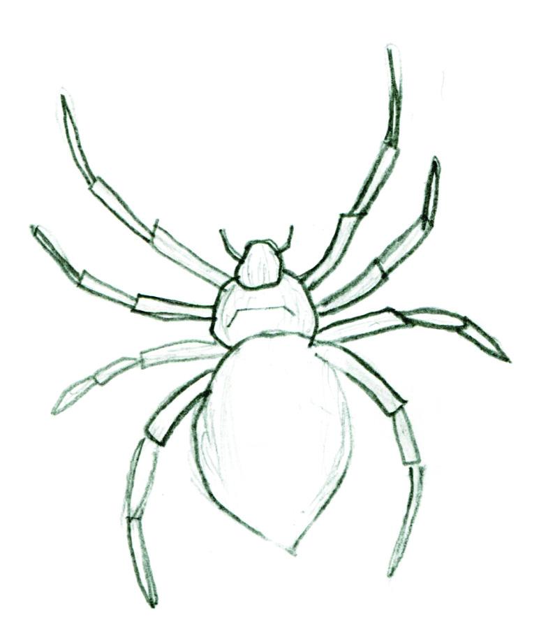 772x916 Kids Art Spiders The Wild World Of Zoobooks