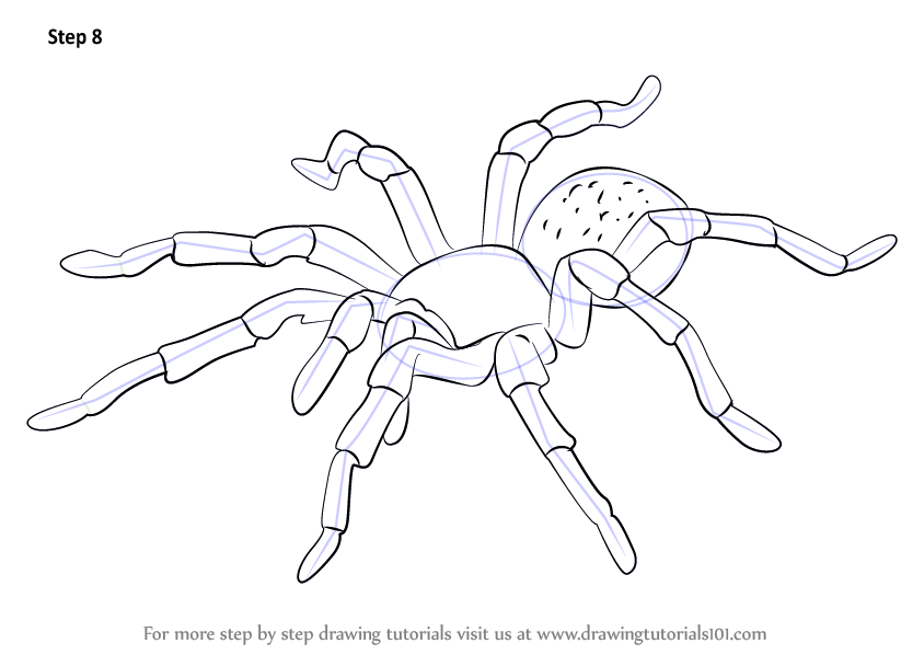 844x598 Learn How To Draw A Tarantula (Arachnids) Step By Step Drawing