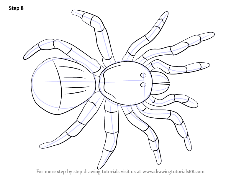 844x598 Learn How To Draw A Trapdoor Spider (Arachnids) Step By Step