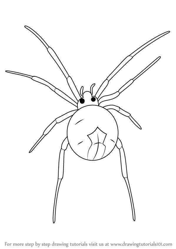 598x844 Learn How To Draw A Widow Spider (Other Animals) Step By Step