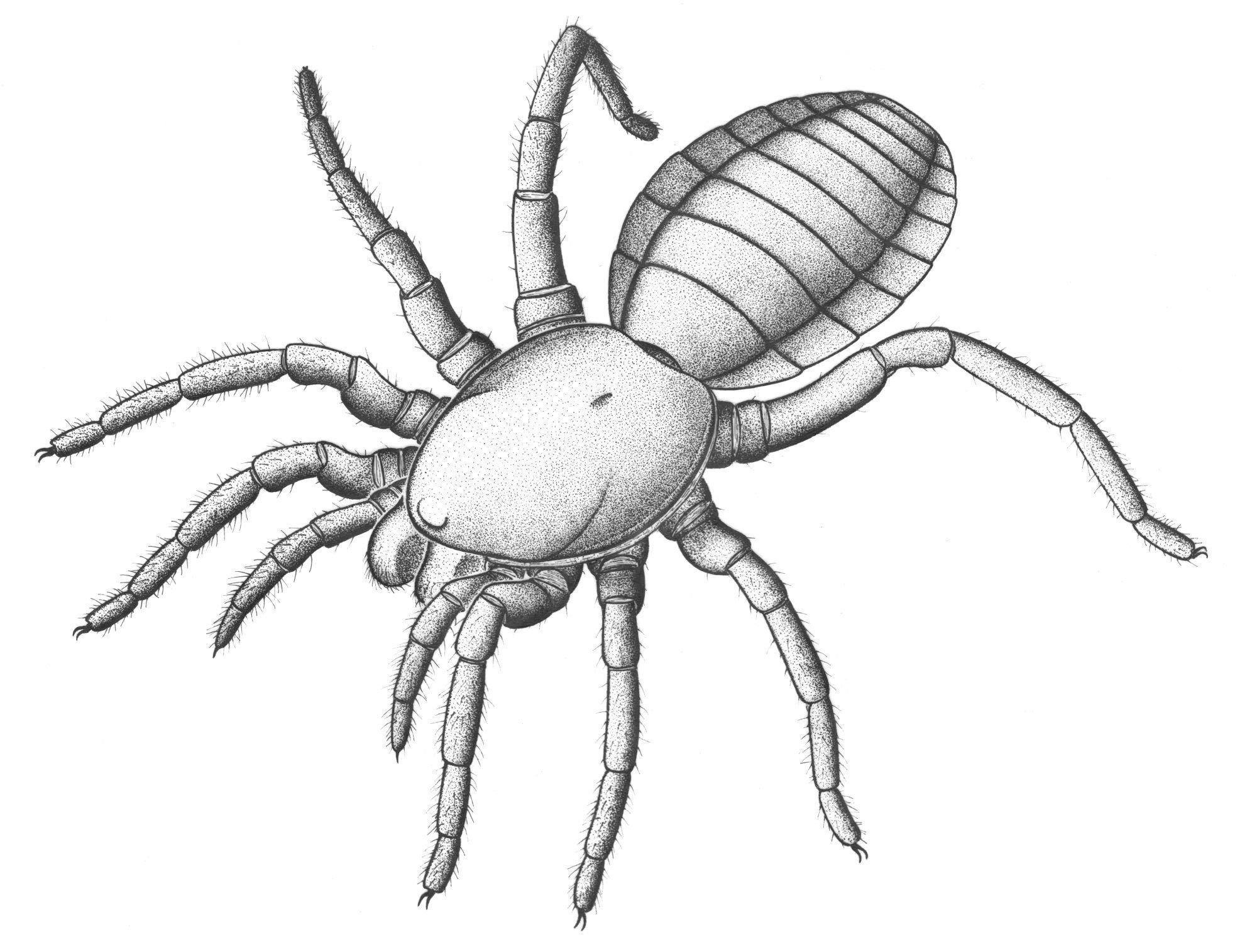 2000x1515 305 Million Year Old Almost Spider Unlocks Arachnid History