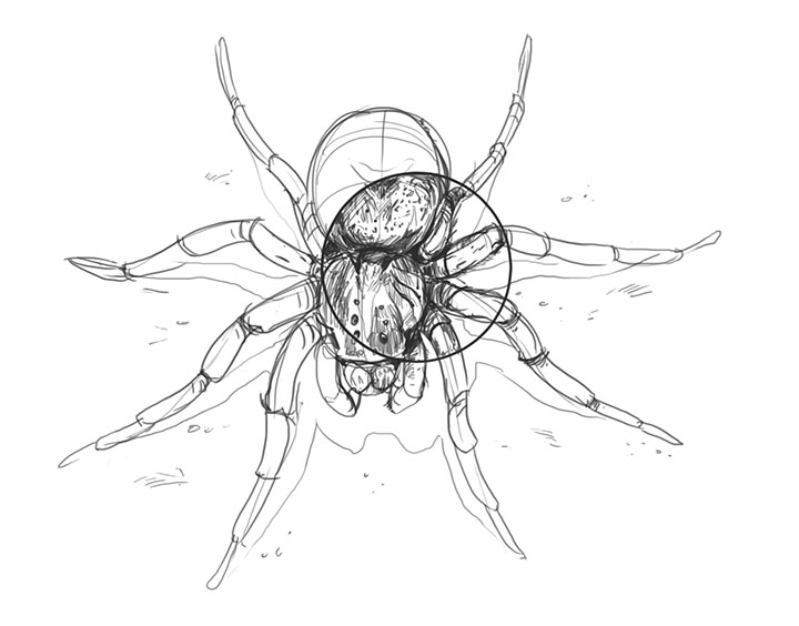 720x564 Lesson 4 Drawing Insects And Arachnids