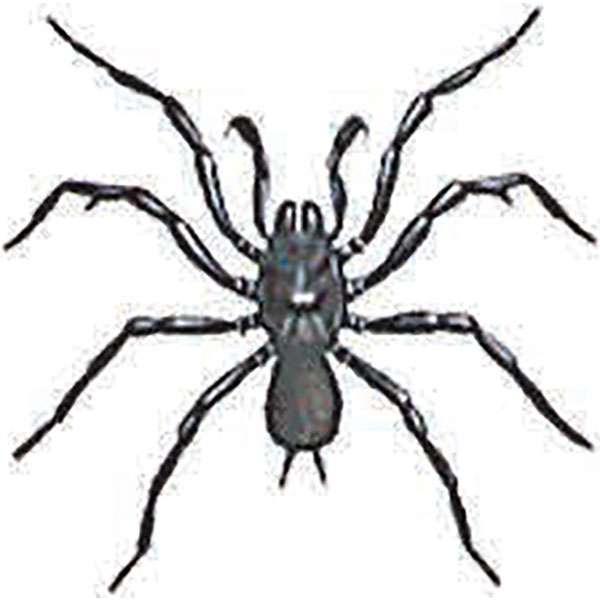 600x600 Spider Identification