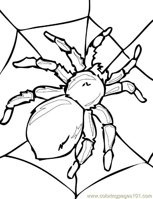 500x647 Spider Picture (1) Coloring Page