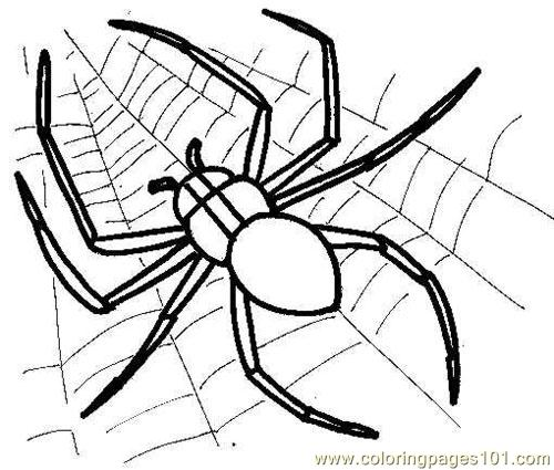 500x425 Spider Picture Coloring Page