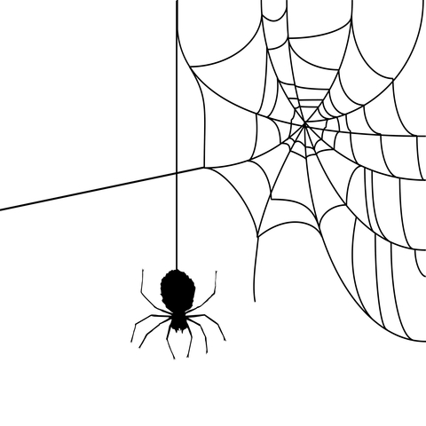 480x480 Story Weekend Spiders