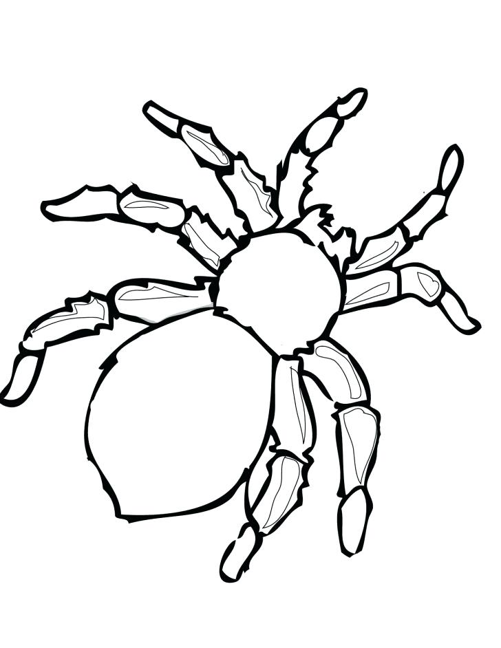 728x942 Tarantula Coloring Page Red Back Spider Drawing Spider Coloring