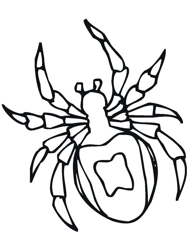 600x800 Tarantula Coloring Page Tarantula Spider Drawing Coloring Page