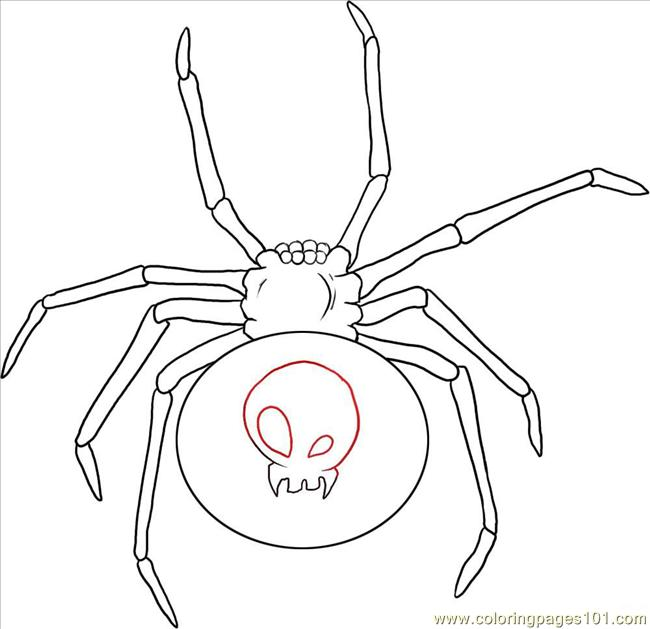 650x629 W A Black Widow Spider Step 4 Coloring Page