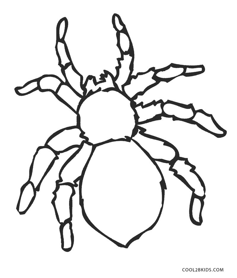800x939 Free Printable Spider Coloring Pages For Kids Cool2bkids