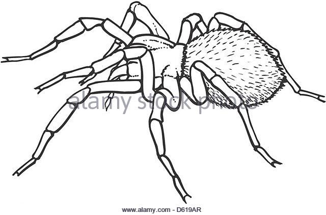 640x422 Goliath Bird Eating Spider Stock Photos Amp Goliath Bird Eating