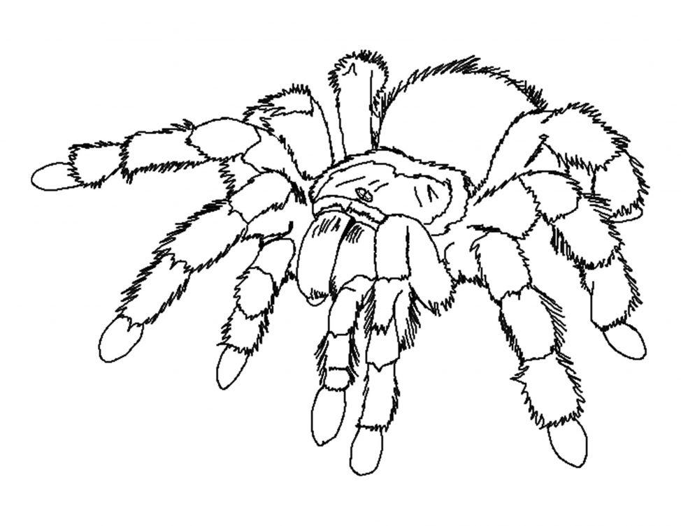 974x753 Coloring Pages Spiders Coloring Pages Spider Free Printable