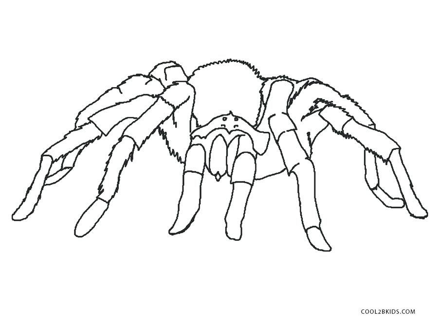 900x668 Spider Coloring Pages For Adults Free Printable Kids Best
