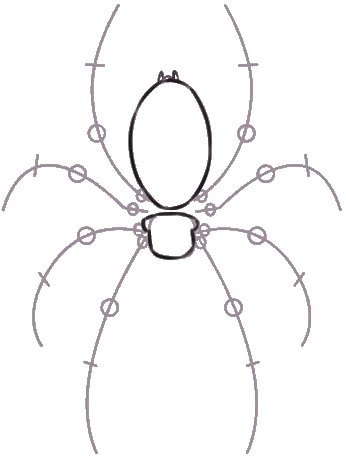 346x458 How To Draw A Brown Recluse Spider