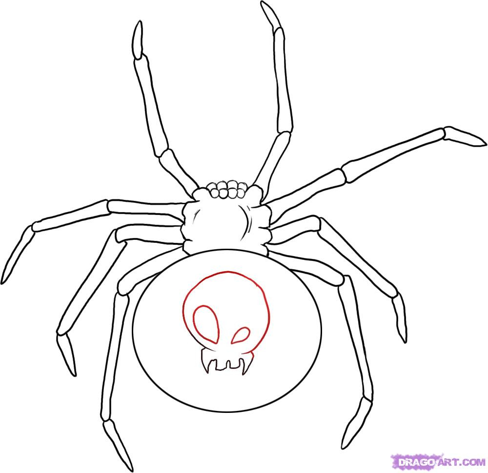 1000x968 Red Back Spider Drawing How To Draw A Black Widow, Step By Step
