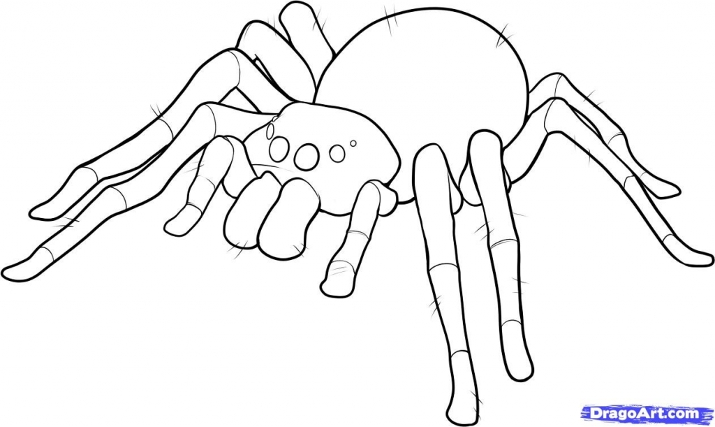 1024x611 How To Draw A Spider