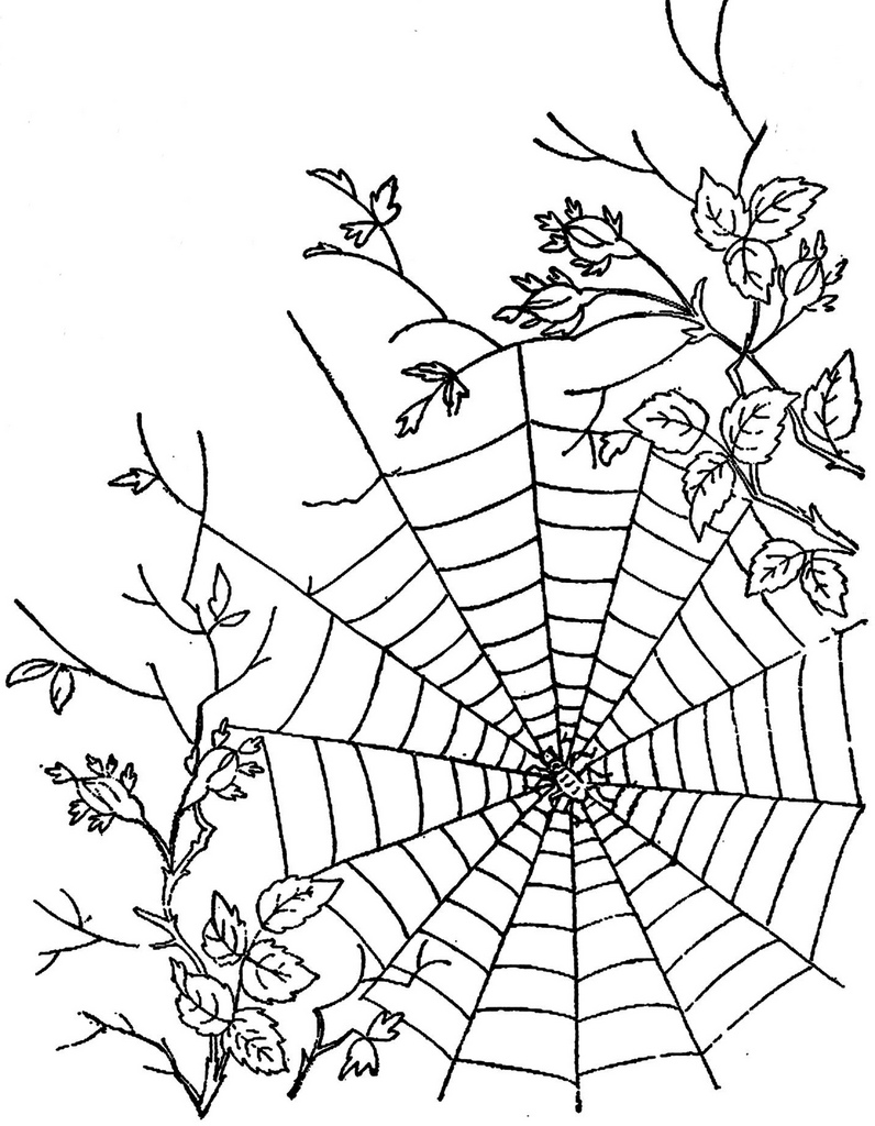 796x1024 1886 Ingalls Spiderweb In Roses Spider Webs, Spider And Embroidery