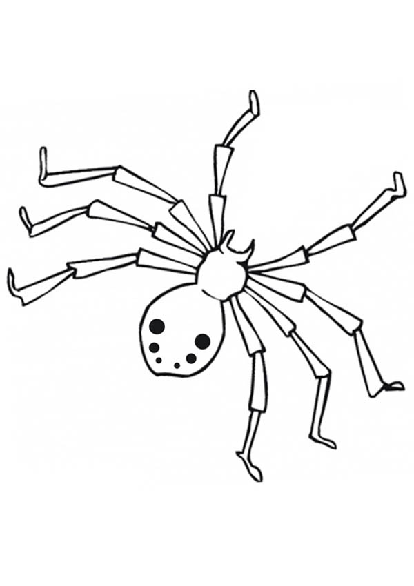 600x850 Realistic Drawing Of Spider Web Coloring Page